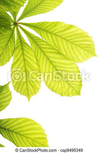Fresh chestnut leafs - csp9495349