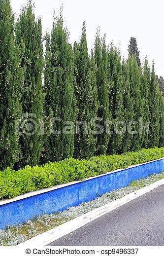 image de haie arbres conif re vert arbres naturel haie mur csp9496337 recherchez. Black Bedroom Furniture Sets. Home Design Ideas