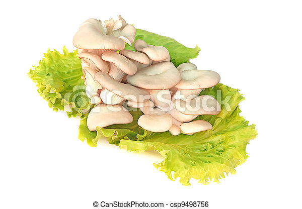 Oyster Mushroom on Greenery Vegetables plate ecologically clear product - csp9498756