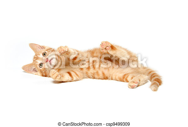 Cute yellow kitten on white - csp9499309