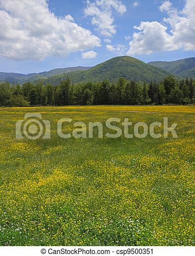 Mountains, Blomstrar - csp9500351