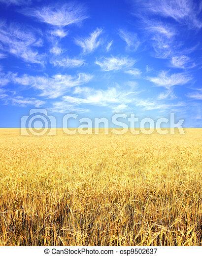 Crop of rye - csp9502637