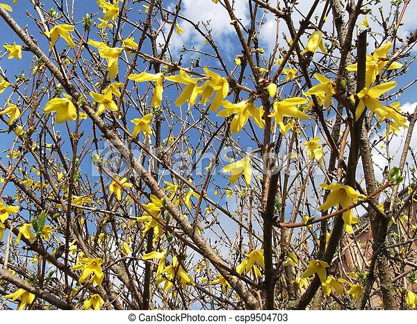 photos de fleurs ressort arbre soutien gorge jaune yellow fleurs csp9504703. Black Bedroom Furniture Sets. Home Design Ideas