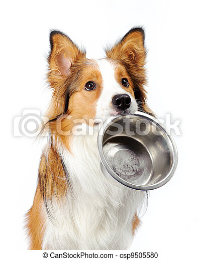dog with bowl - csp9505580