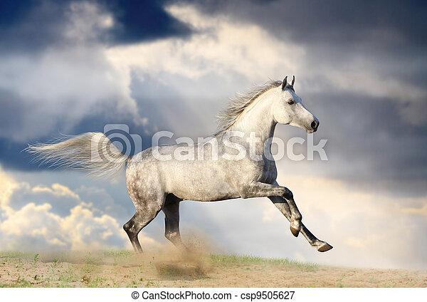 stallion in dust - csp9505627