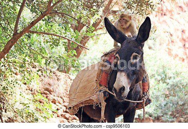monkey on donkey - csp9506103