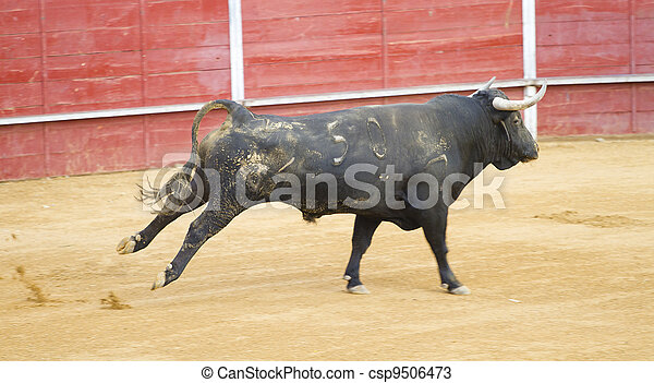 Bullfighting of bulls, typical Spanish tradition where a torero (bullfighter) kills a bull. - csp9506473