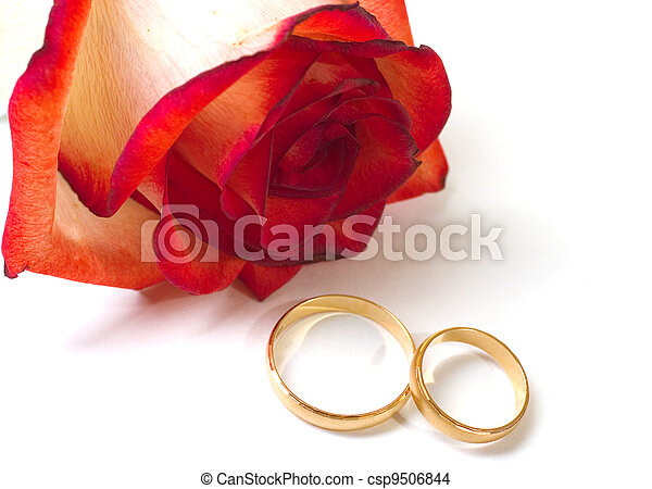Scarlet fragile rose and two wedding rings on a white background - csp9506844