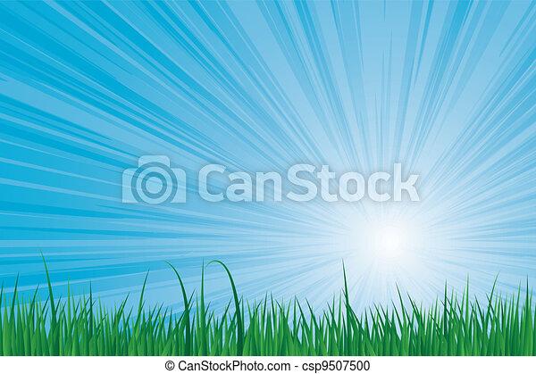 sunburst green grass - csp9507500