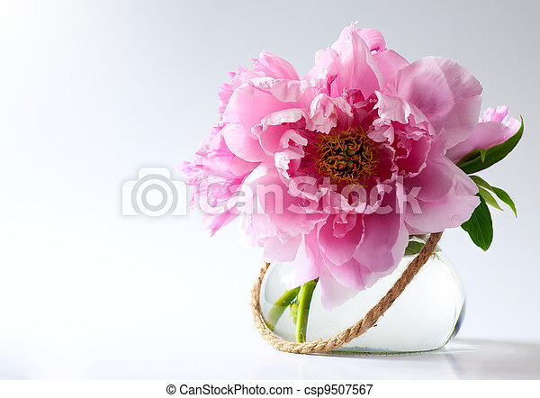 spring flowers in vase on white background - csp9507567