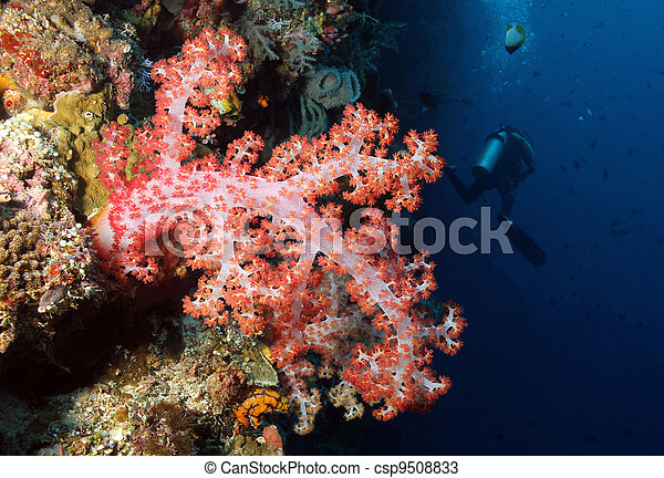 Soft Tree Coral and Diver, Bunaken, Indonesia - csp9508833