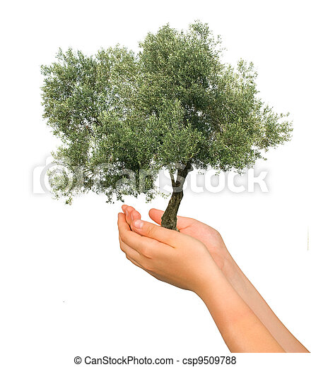 Olive tree as a gift of agriculture - csp9509788