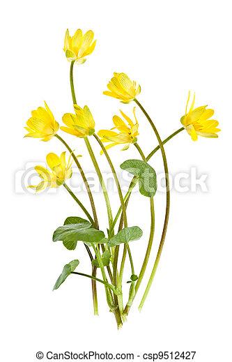 Yellow spring wild flowers - csp9512427