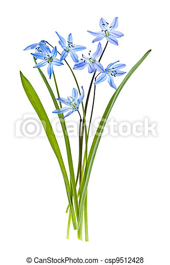 Glory of the snow flowers - csp9512428