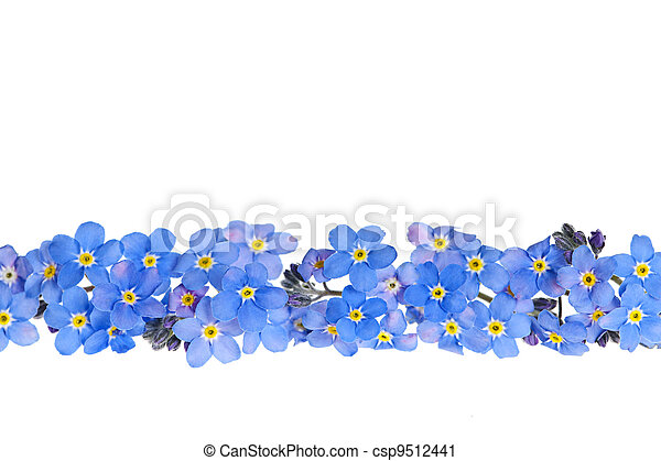 Blue spring flower border - csp9512441
