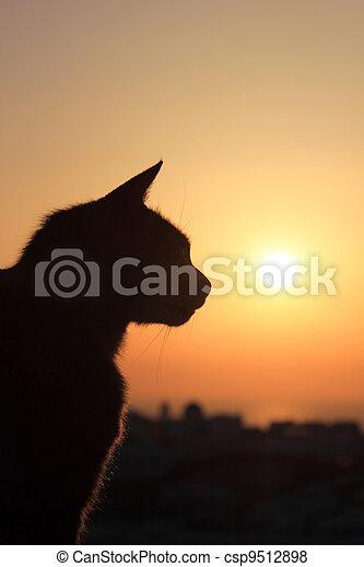 Cat at sunset in Oia Santorini  - csp9512898
