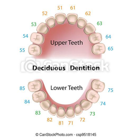 Dental notation milk teeth - csp9518145