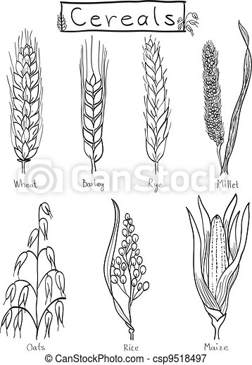 Cereals hand-drawn illustration - csp9518497