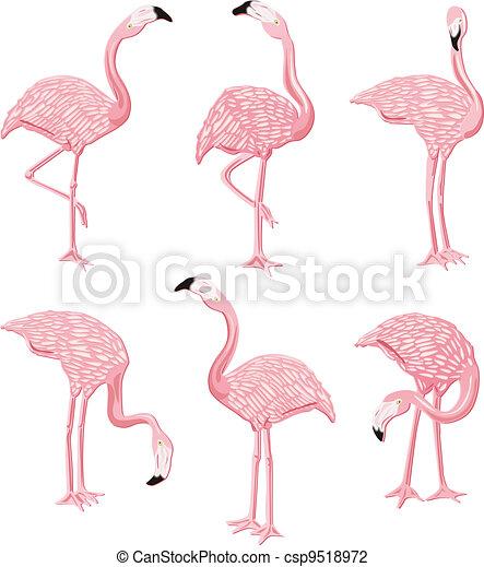 Flamingos Pink - csp9518972