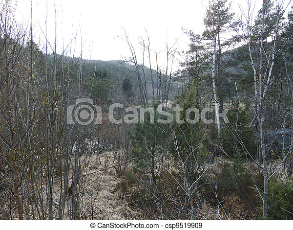 rural forest in norway - csp9519909