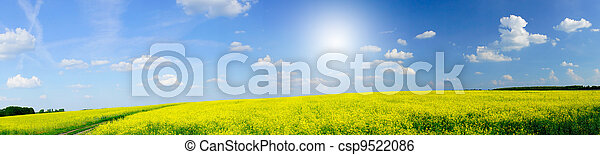 Beautiful panorama of golden rapefield and blue sky.