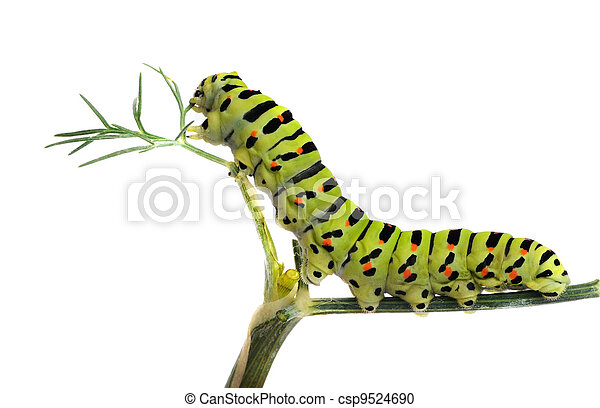 Caterpillar on grass isolated on white background - csp9524690