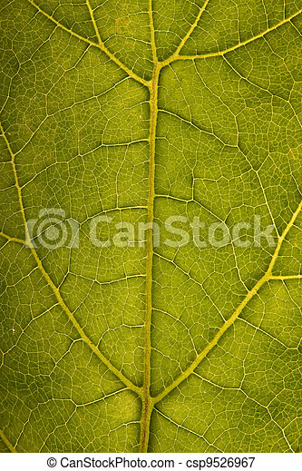 Leaf structure - csp9526967