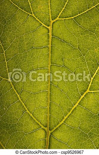 Leaf structure - csp9526967