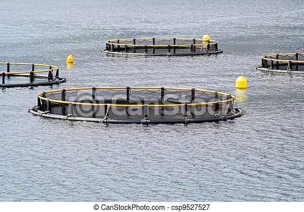 Aqua farming - csp9527527