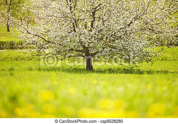 Flowering tree - csp9528280