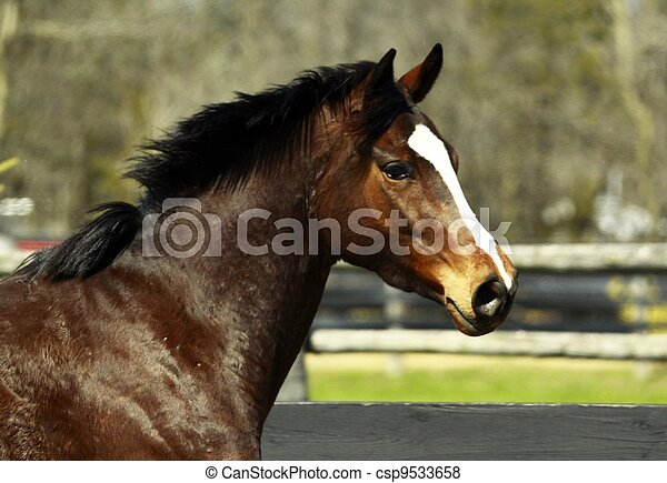 Thoroughbred Filly - csp9533658
