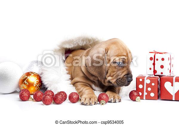 Happy doggy - csp9534005