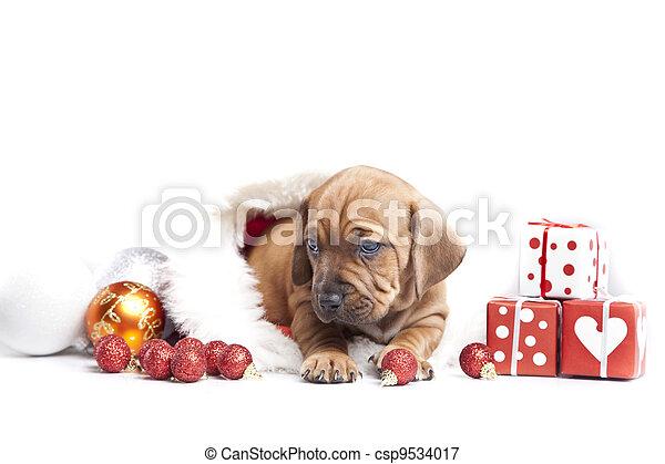 Happy doggy - csp9534017
