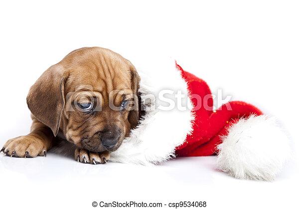 happy doggy - csp9534068