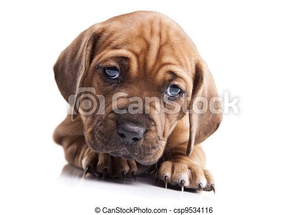happy doggy - csp9534116