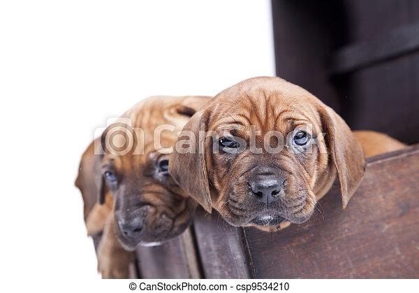happy doggy - csp9534210