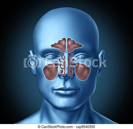 Sinus human nasal cavity with human head - csp9540350