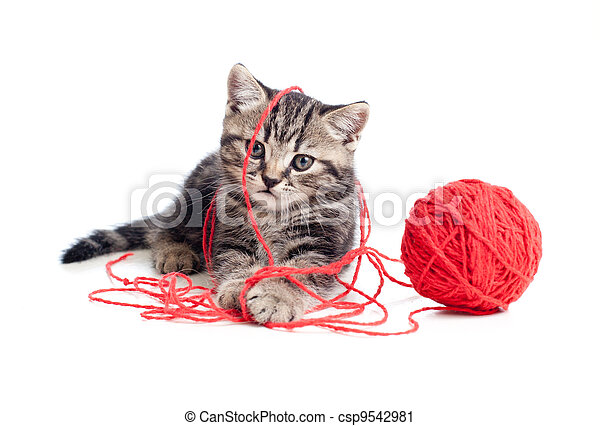 nice tabby kitten playing red clew or ball - csp9542981