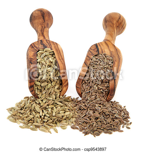 Fennel and Dill Seed - csp9543897