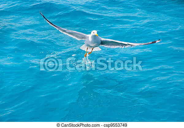 bird seagull on sea water in ocean - csp9553749