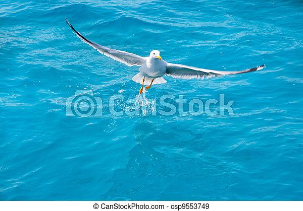 bird seagull on sea water in ocean - csp9553749