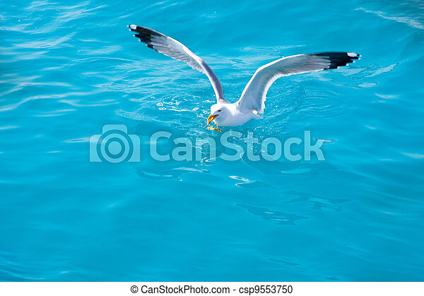 bird seagull on sea water in ocean - csp9553750