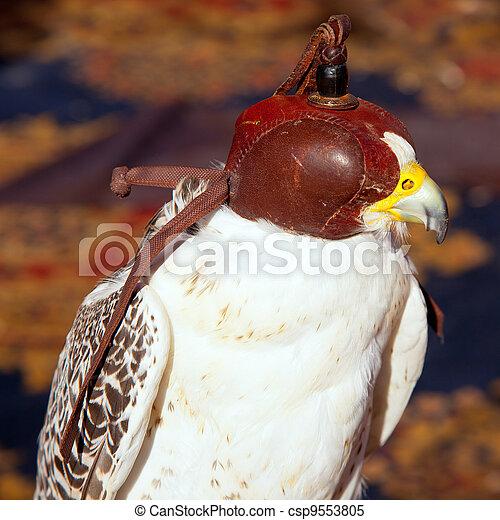 bird falcon with falconry blind hood - csp9553805