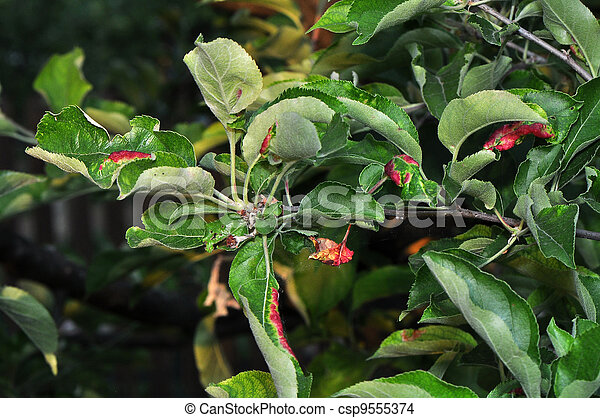 Apple Tree Illness - csp9555374