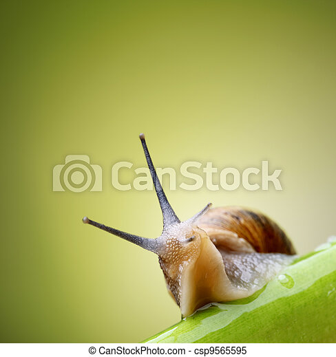Snail on green stem - csp9565595
