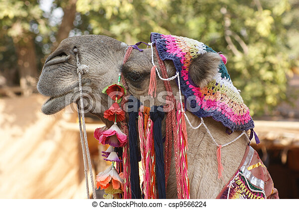 adorned camel portrait - csp9566224