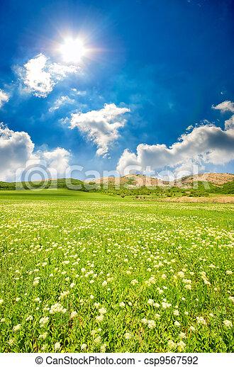green grass - csp9567592