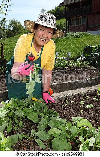 Senior woman gardening - csp9569981
