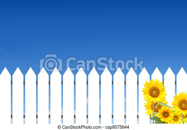 White fence with sunflowers - csp9575644