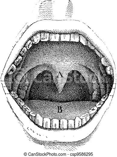 Vecteur figue 182 illustration int rieur humain for Interieur de la bouche